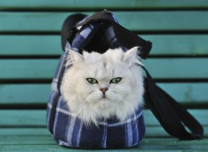 White cat sitting in a bag for the animals on the bench